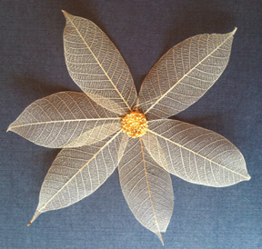 Natural skeleton leaves with Heart of Gold prills