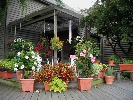 Steve's Deck Garden