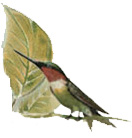 bg-bird-leaf